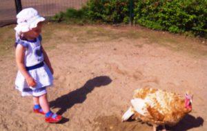 Знакомимся с индюком в зоопарке