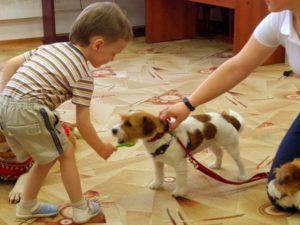 Умная собачка Соня умеет есть доже с ложки!